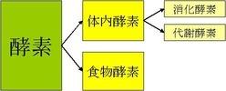 酵素の種類.jpg